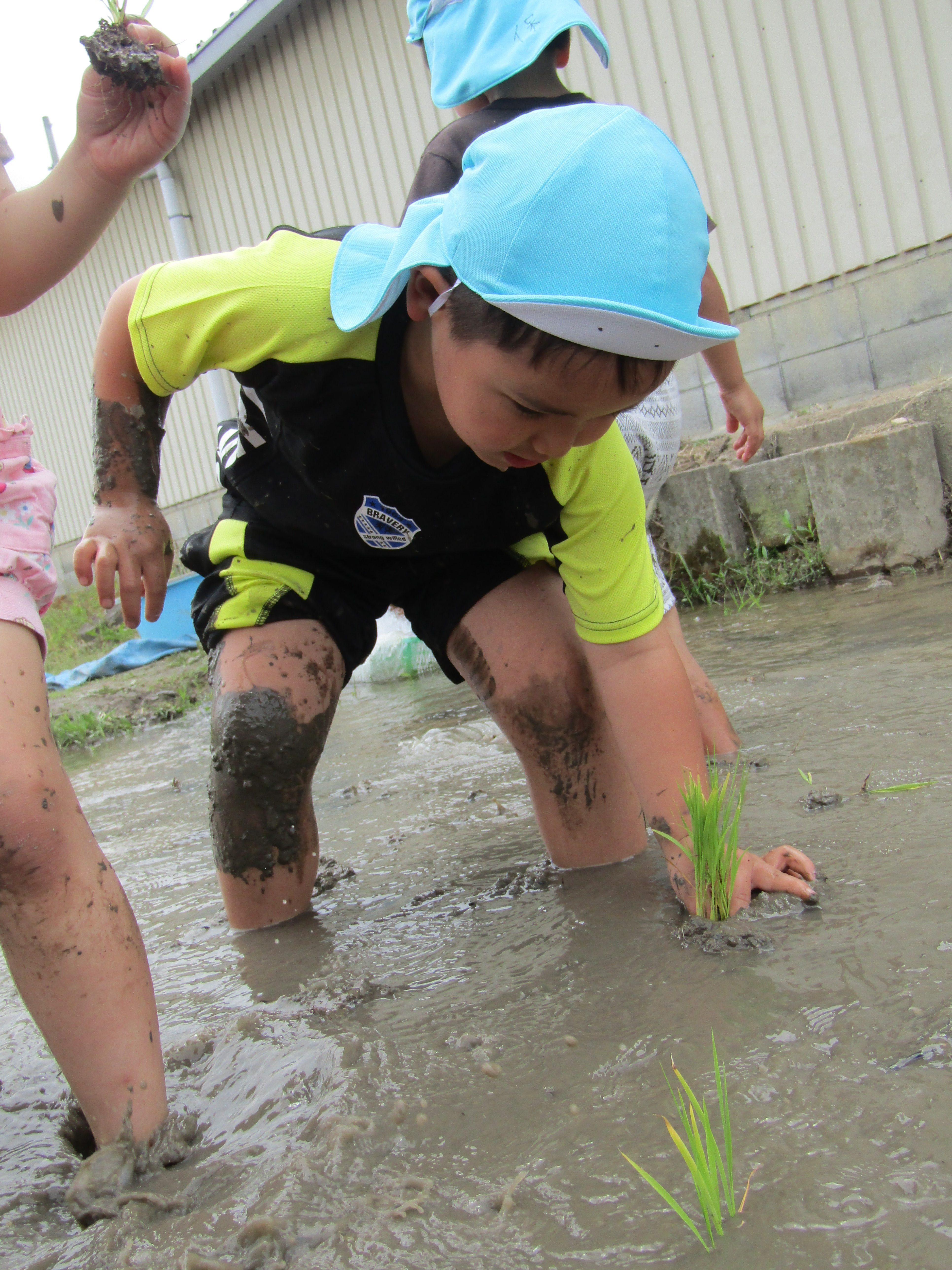5歳児 田植え(松原カリーノ保育園)